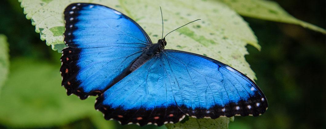 Erwachen mit Rasa: Von der Raupe zum Schmetterling